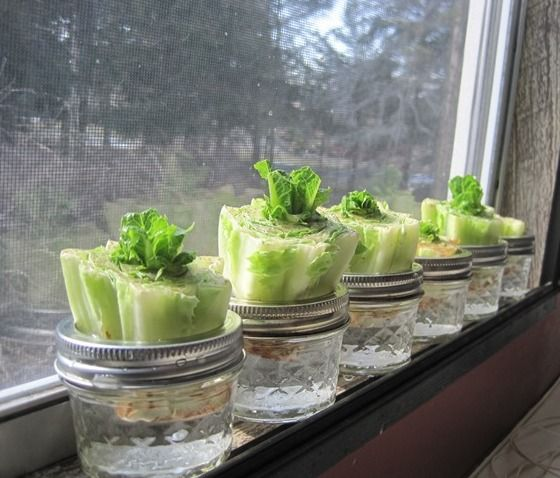 16 Foods That Ll Re Grow From Kitchen Scraps: How To Grow Vegetables From Leftovers/ Scraps