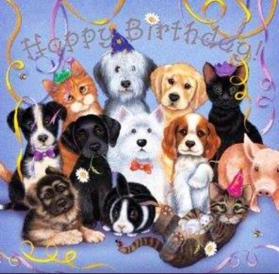 Birthday Party Dogs And Cats Happy Dog Quotes Love