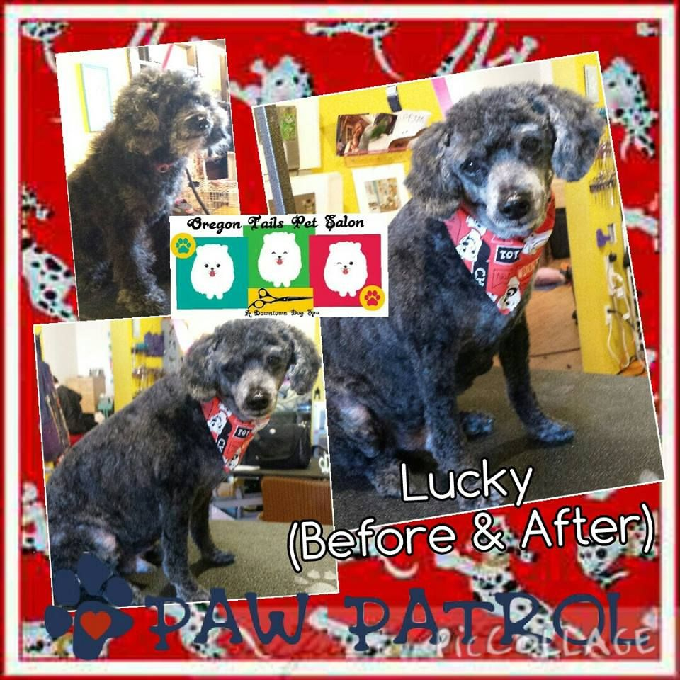 Lucky Was Groomed By The Wonderful Team At Oregon Tails Pet Salon Paw Paw Patrol Pet Salon