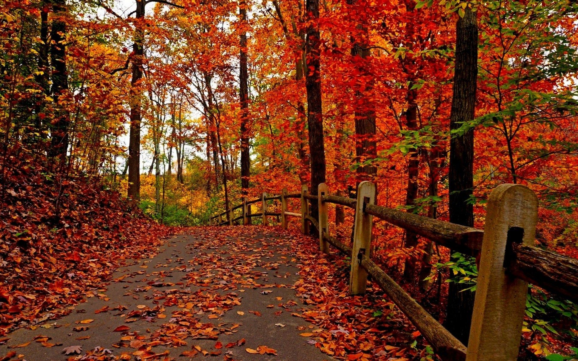 Free Screensaver Wallpapers For Fall Fall Desktop Backgrounds Autumn Trees Autumn Forest