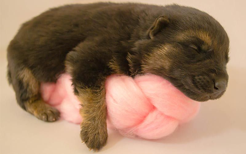 Runt Of The Litter Health Problems And Caring For Runt