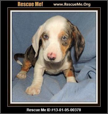Rescue Critters Columbiana Oh Meet Dalia She Is An 8 Week