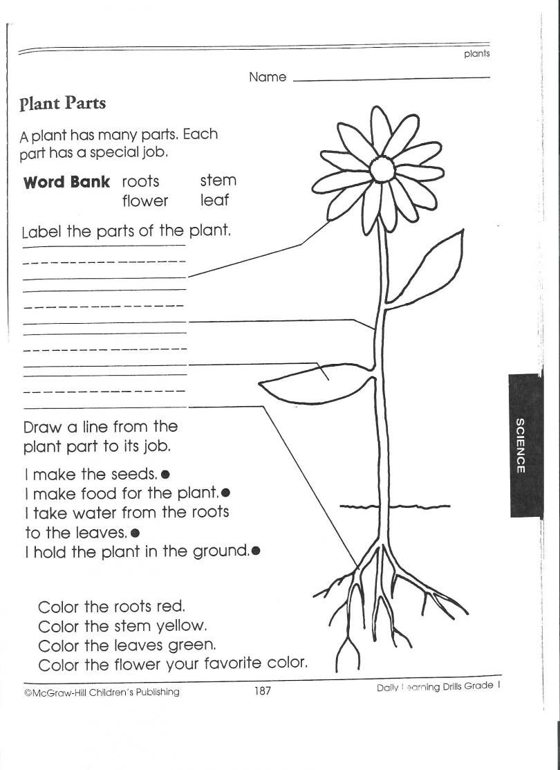 1st grade science worksheets – Structure of a Flower Worksheet