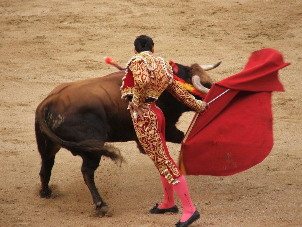 Bullfighting Wallpaper  X
