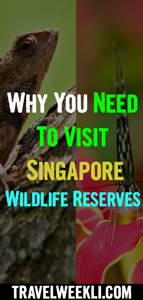Why You Need To Visit Singapore Wildlife Reserves Visit