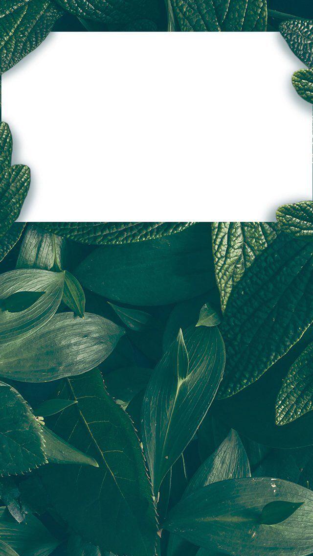 Aesthetic Iphone Pinterest Wallpapers - wallpaper