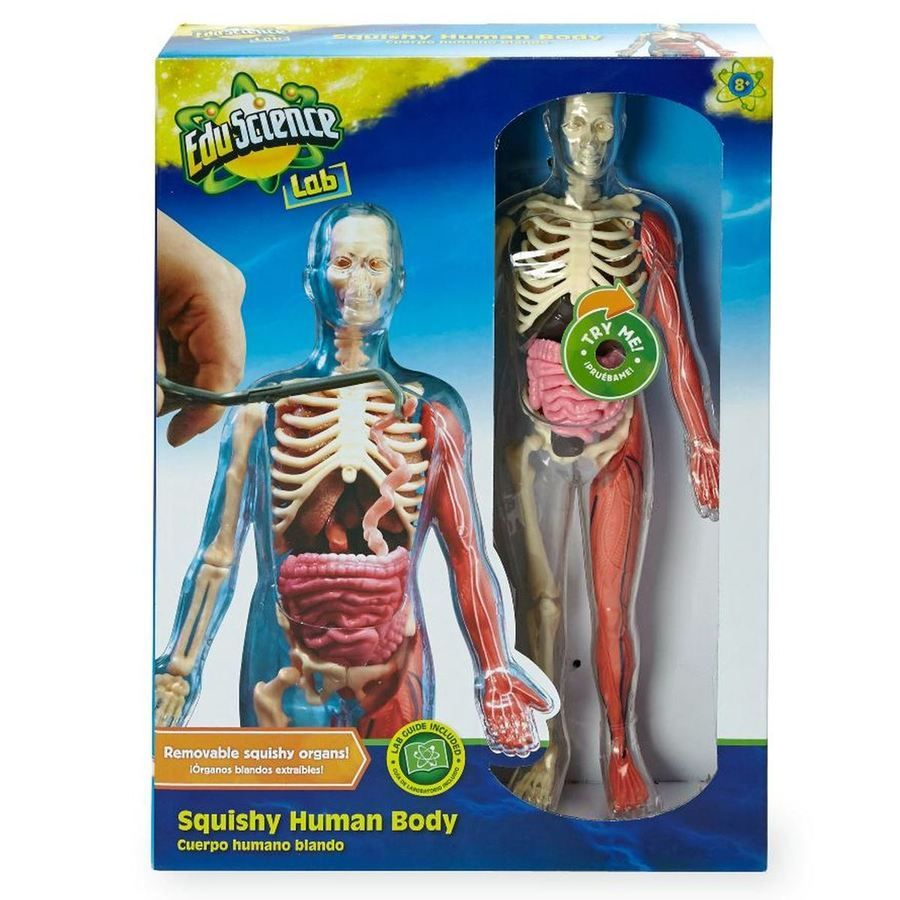 "New Edu Science Lab 12"" Squishy Human Body Children's ..."