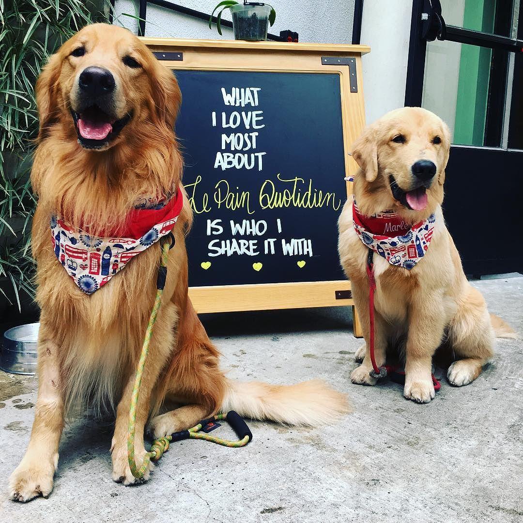 Golden Retriever Conhecendo a @lpqbr aqui da Vila Nova Conceição !!! Aqui é Petfriendly!!!   A Petfriendly establishment!  #Bob #Marley #AumigosDoBobEMarley #dicaDoBob #petfriendly #lepainquotidien #sp #sampa #goldenretriever #goldenretrieverbrasil #goldenretrieverworld #dogsofinstagram #petstagram #instapet #instapetbrasil #instaBobEMarley by bob_marley_goldenretriever