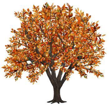 Clip Art Seasons of an Apple Tree   Design Creative   Apple