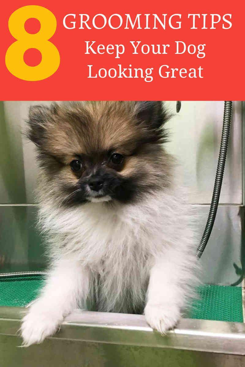Basic Dog Grooming Tips To Know Mydog Dog Grooming Tips Canine