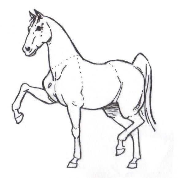 Elegant Color Pages For Kids. How To Draw A Horse? Step By Step Penciling