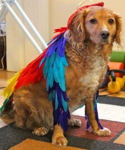 How To Make A Bird Costume For A Dog Bird Costume Dog Halloween