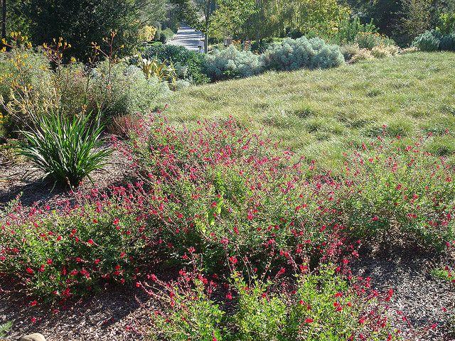 Lawn Alternatives 1 Quot Plugs Of Carex Divulsa Berkeley