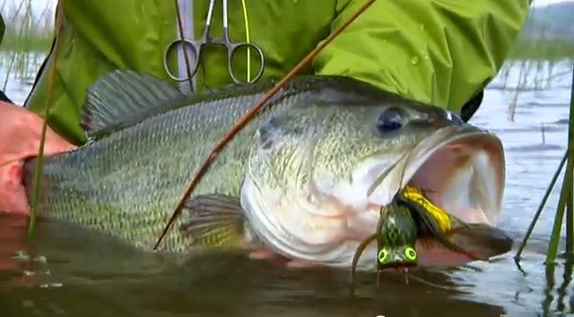 Fly fishing bass todd moen catch magazine fishing for Fly fishing lures for bass