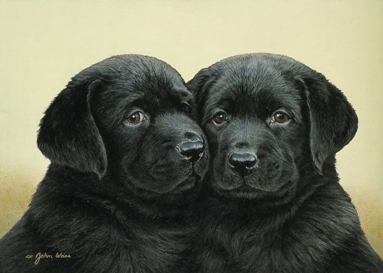 Double Trouble Lab By John Weiss Limited Edition Print Dog Artwork Dog Art Animals