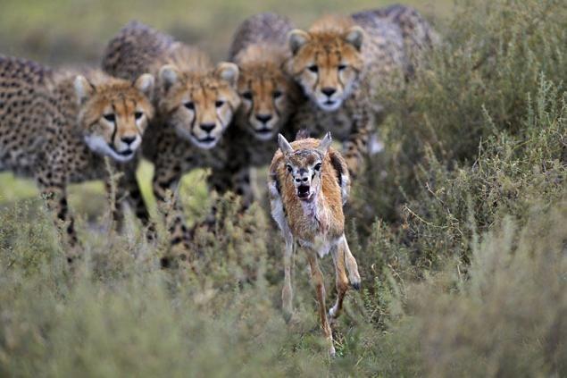 Fotografías Las Imágenes Más Inquietantes De La Vida Salvaje Fotos De Animales Fotografía De Vida Silvestre Fotografía De Mascotas