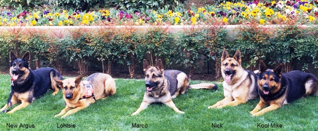 Search Dogs From K L M N Litters Dog Search