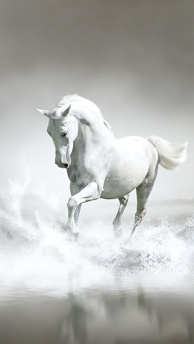 Iphone 5 Wallpaper Horse Wallpaper Horses White Arabian Horse