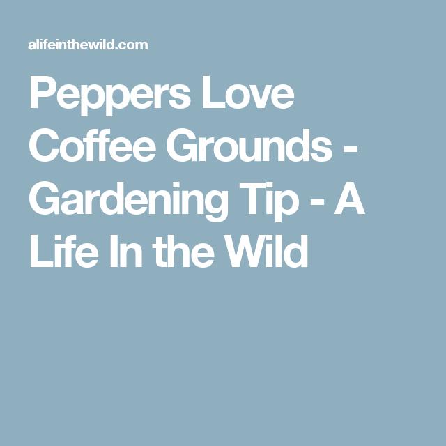 Peppers Love Coffee Grounds. Veg GardenBusy ...