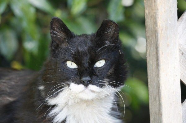 Cats Ears Marked When Spayed Neutered Feral Cats Cats Animals