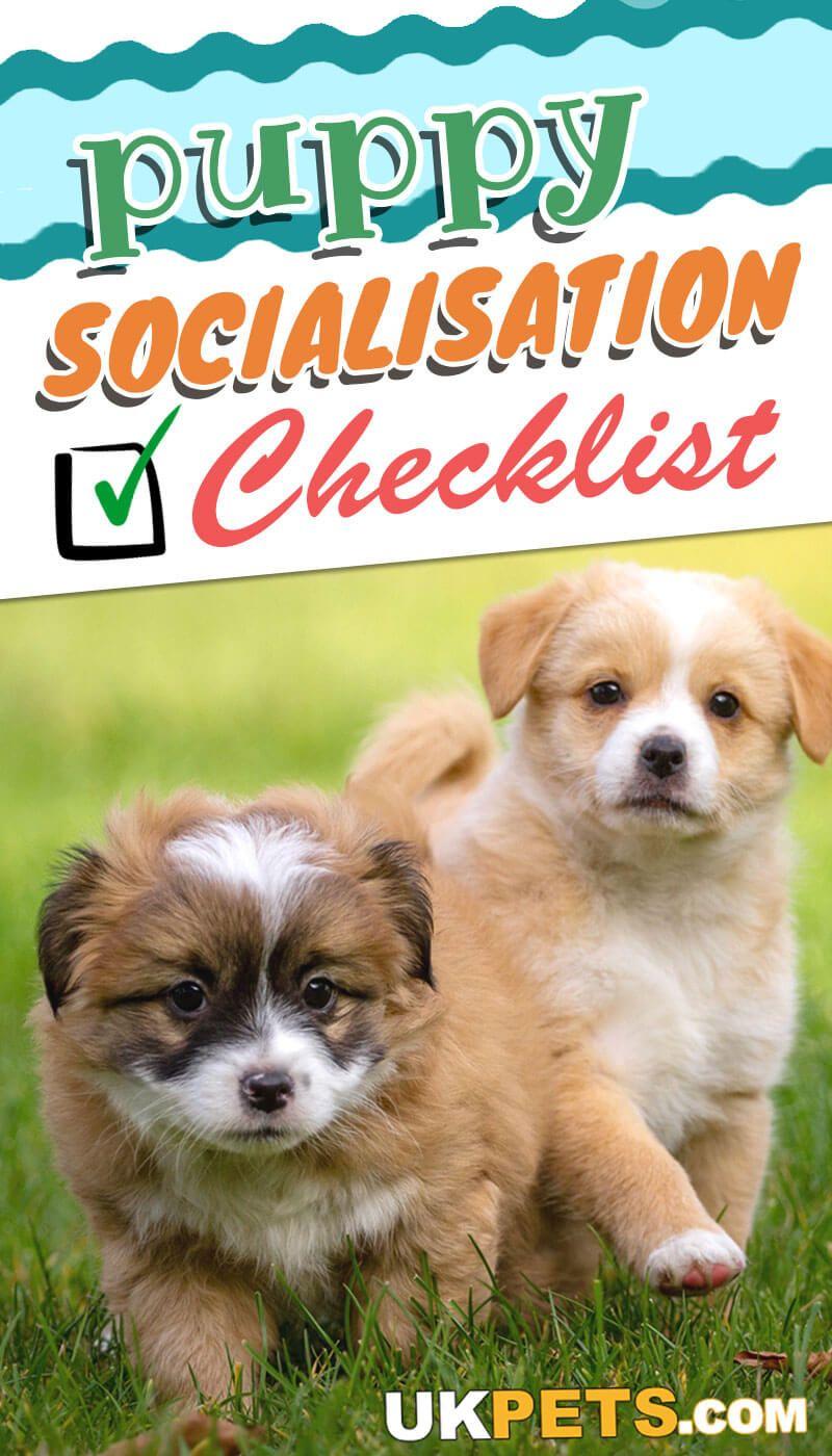 New puppy socialization checklist