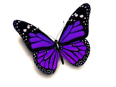 purple butter fly images | 3D purple butterfly