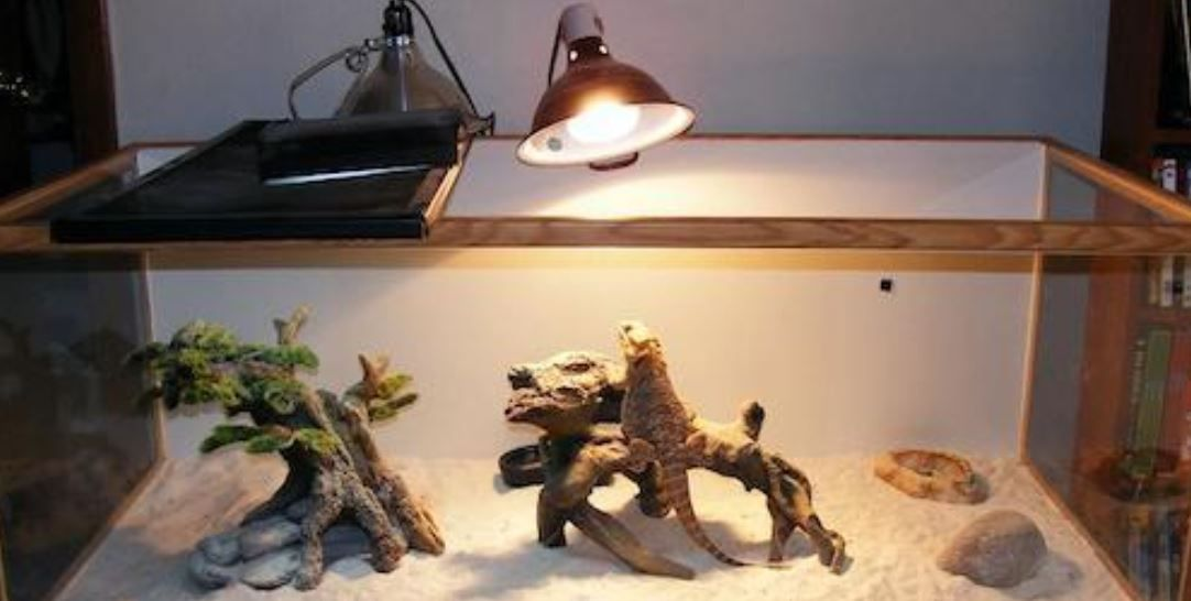 Pin by Thepettime on Bearded Dragon in 2020 Bearded