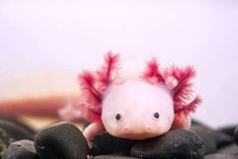 pink animal - Google 検索