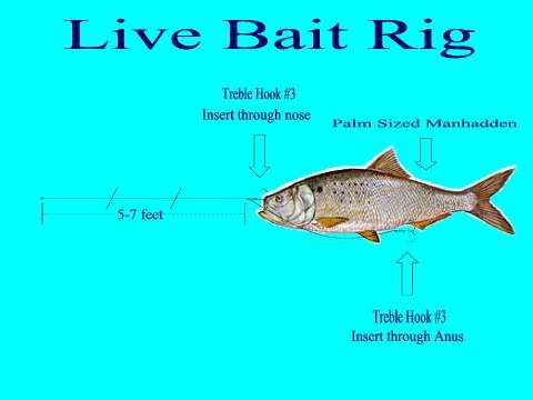 how to use bait rig