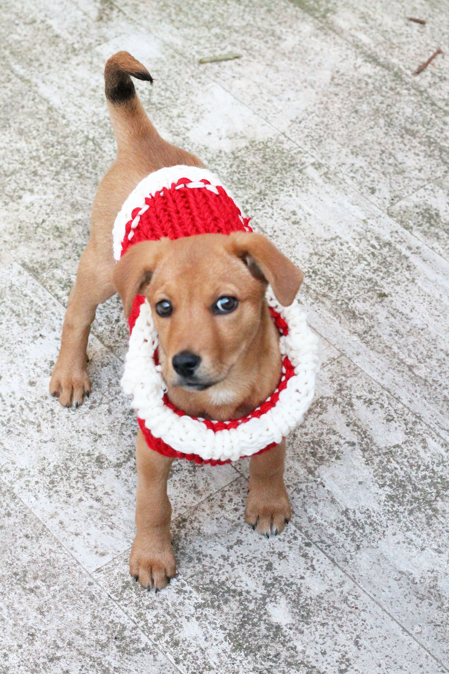 0eb2437a99a57 Christmas puppy sweater knitting pattern by Handy Little Me. Make your puppy  a cute sweater for the holidays with this free pattern.