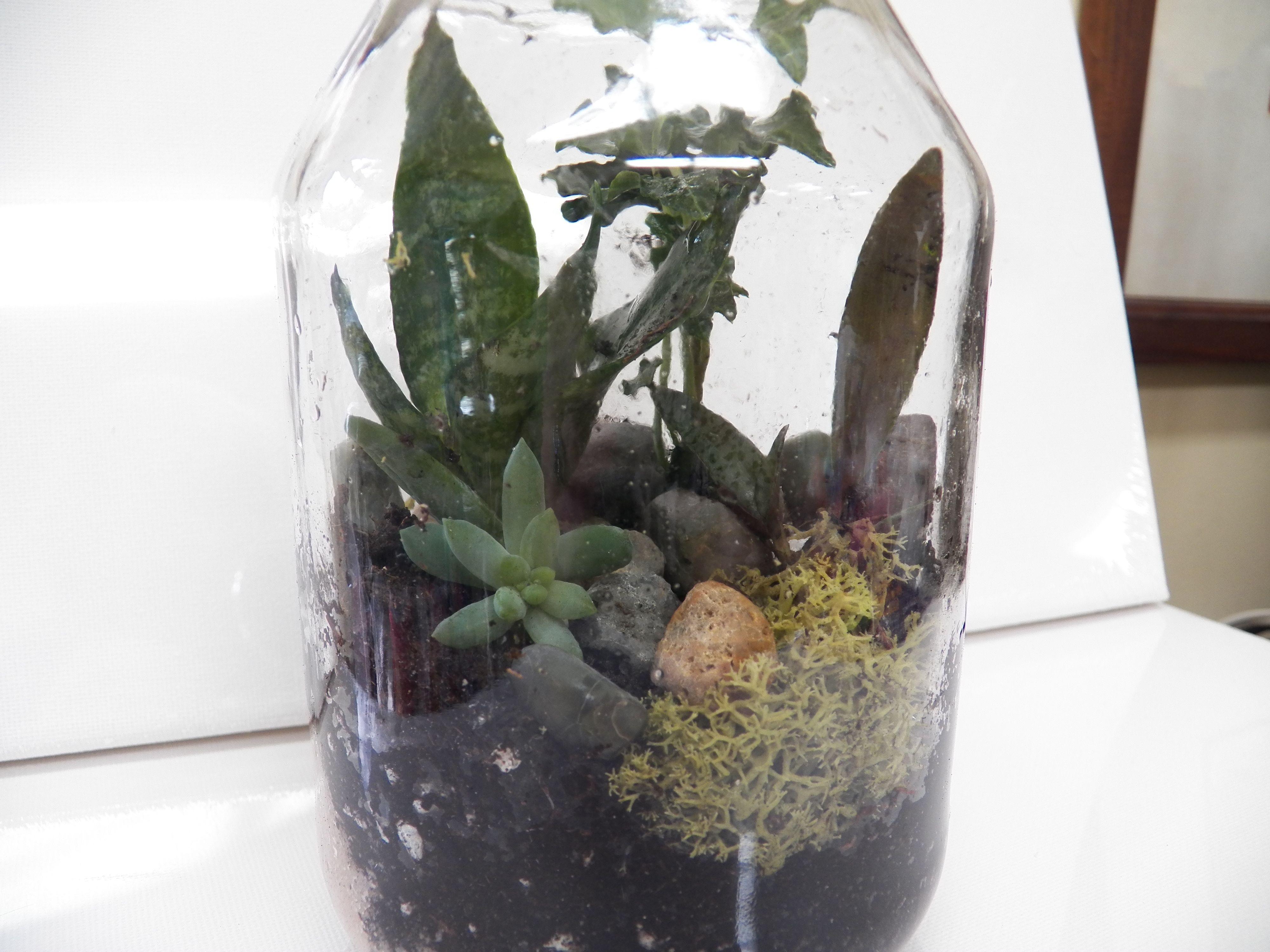 Terrarium Made From A Duke S Mayonnaise Jar For The Home