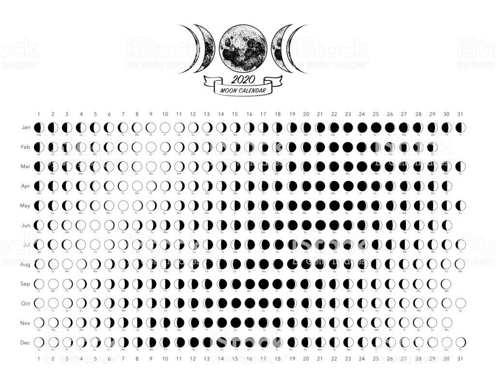 Moon Phases Calendar White Astronomy Vector Chart