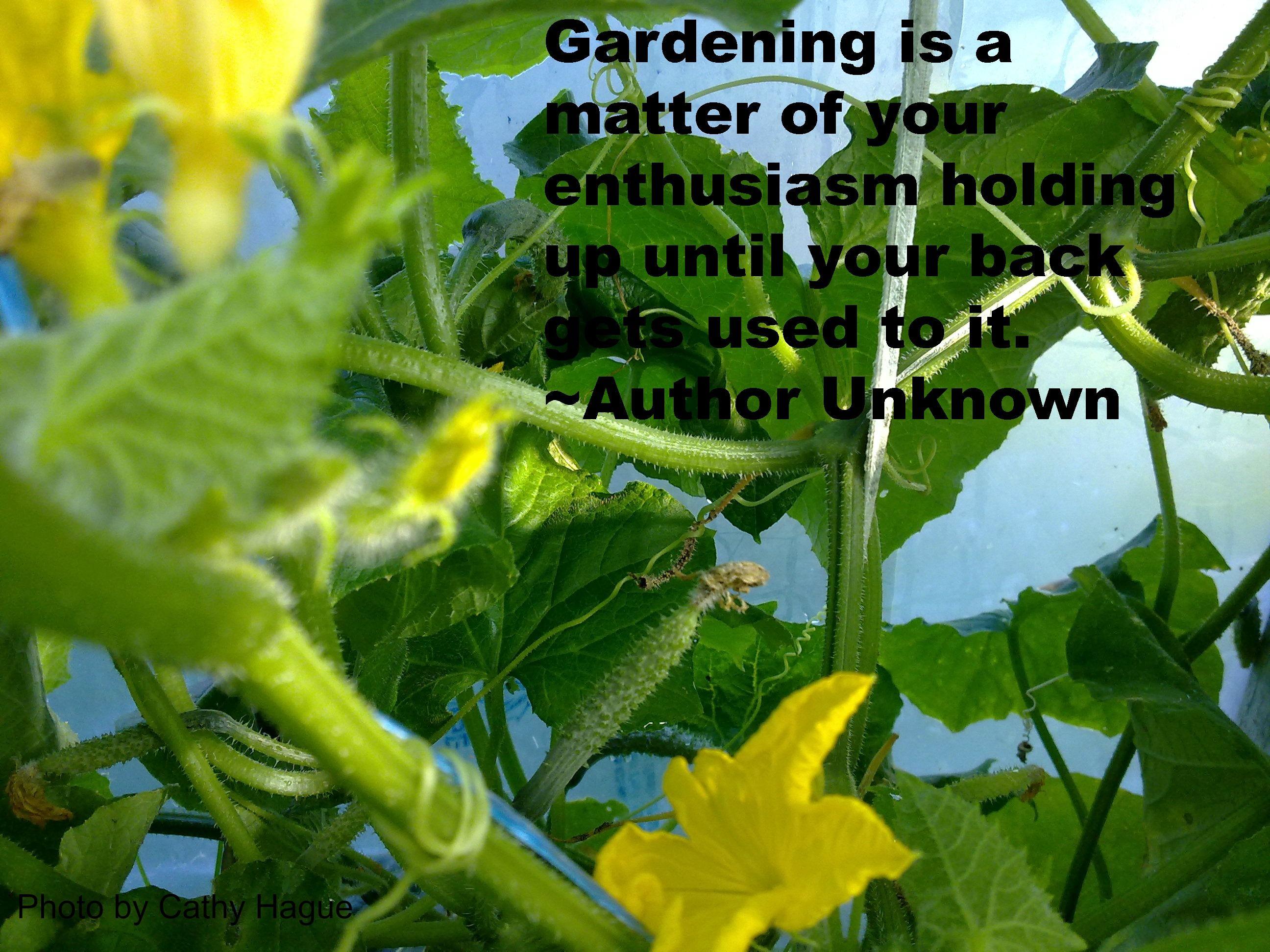 Funny Garden Quotes Gardening Gardening Quotes Funny Garden Quotes Fruit Garden
