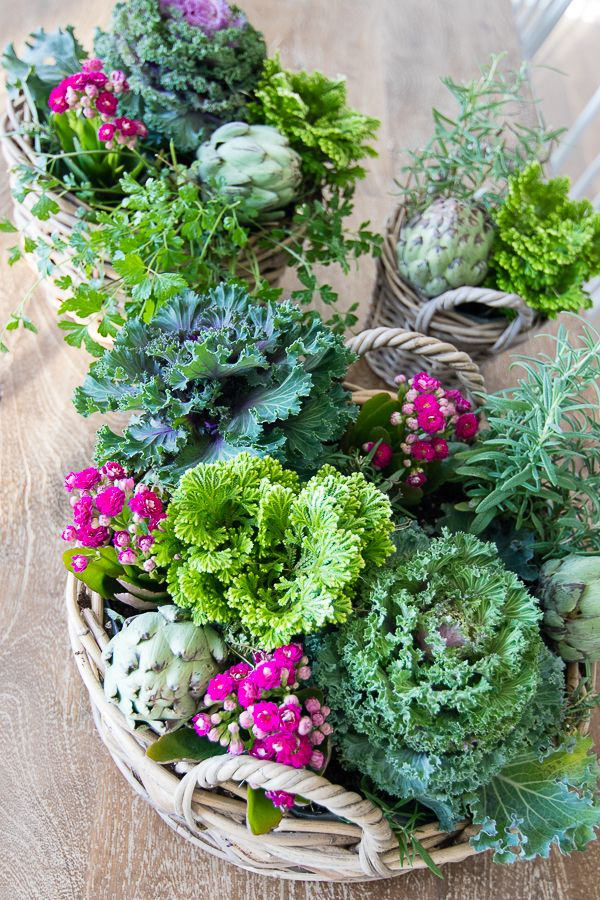 Cabbage Fall Centerpiece Fall Potted Plants Plant 400 x 300