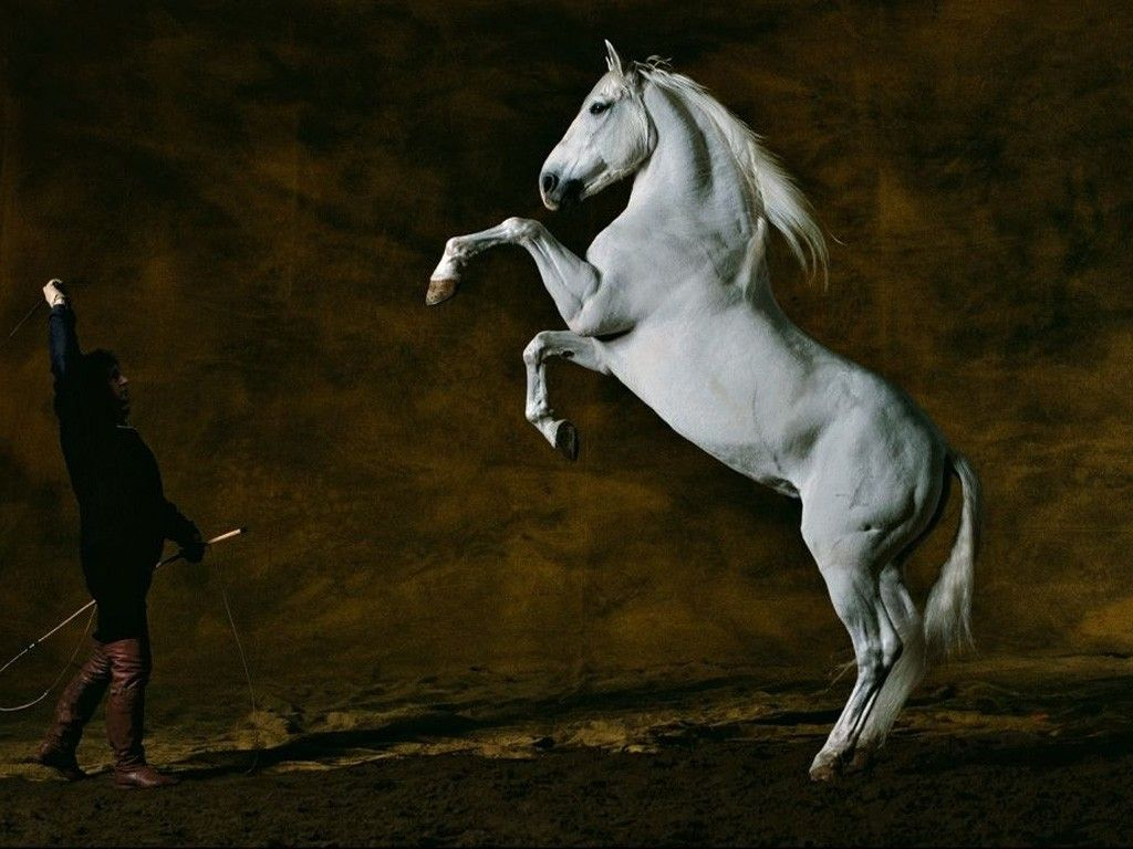 Best Wallpaper Horse Creative - 7b8b7d1055ef4e0423971c6443523c5e  Image_639218.jpg