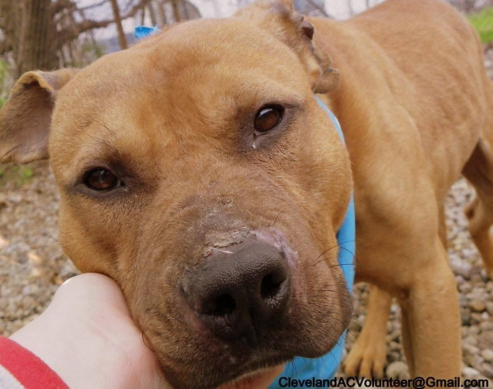 OH Cleveland Shelter Animal is in Urgent Need of a