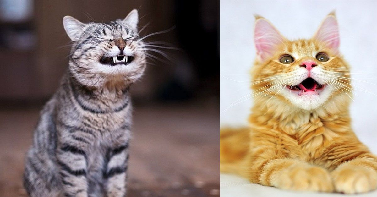 Say cheeefths!! Cats, Smiling cat, Cat love