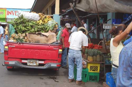 David market