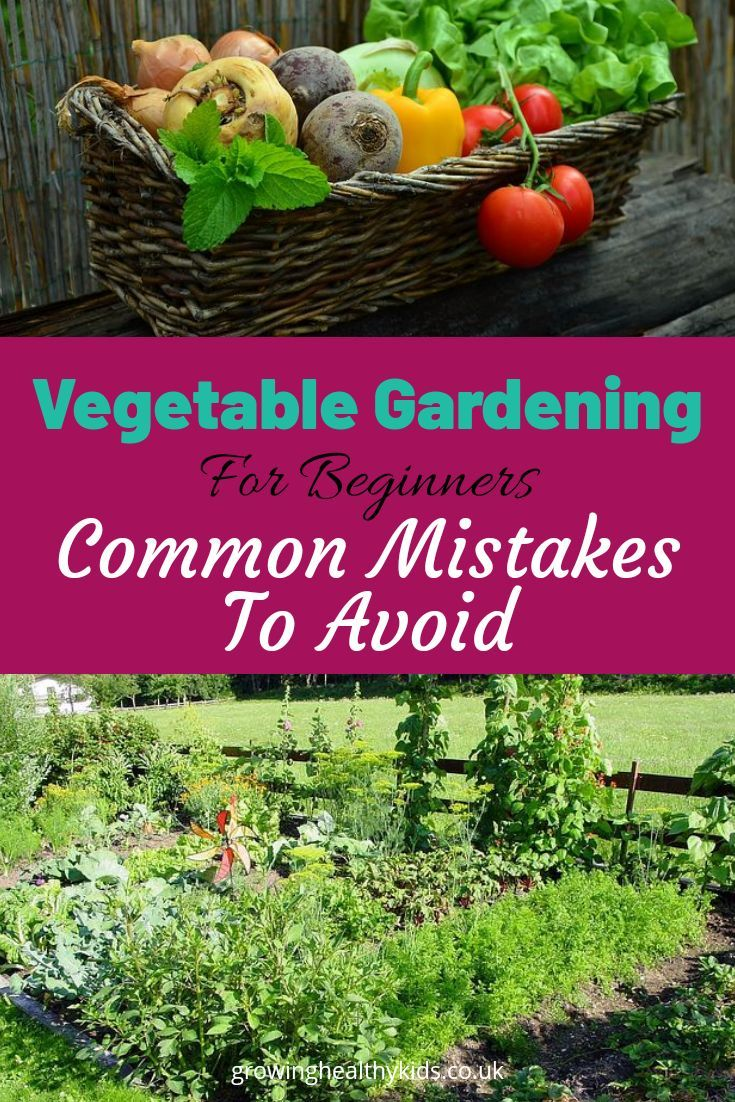 7 Common Mistakes When Starting A Vegetable Garden 640 x 480