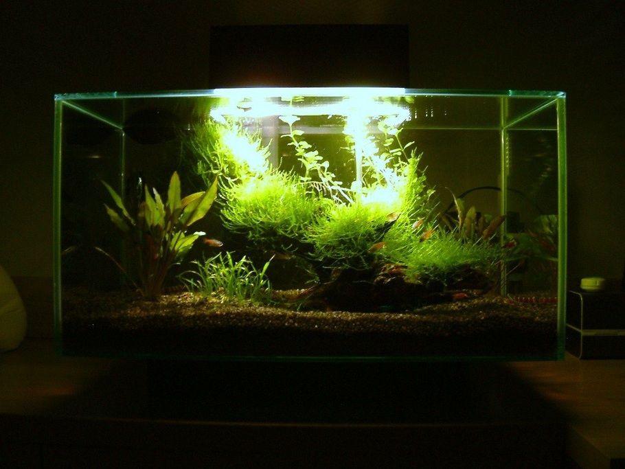 Planted Fluval EDGE Nano Aquarium | Acuario