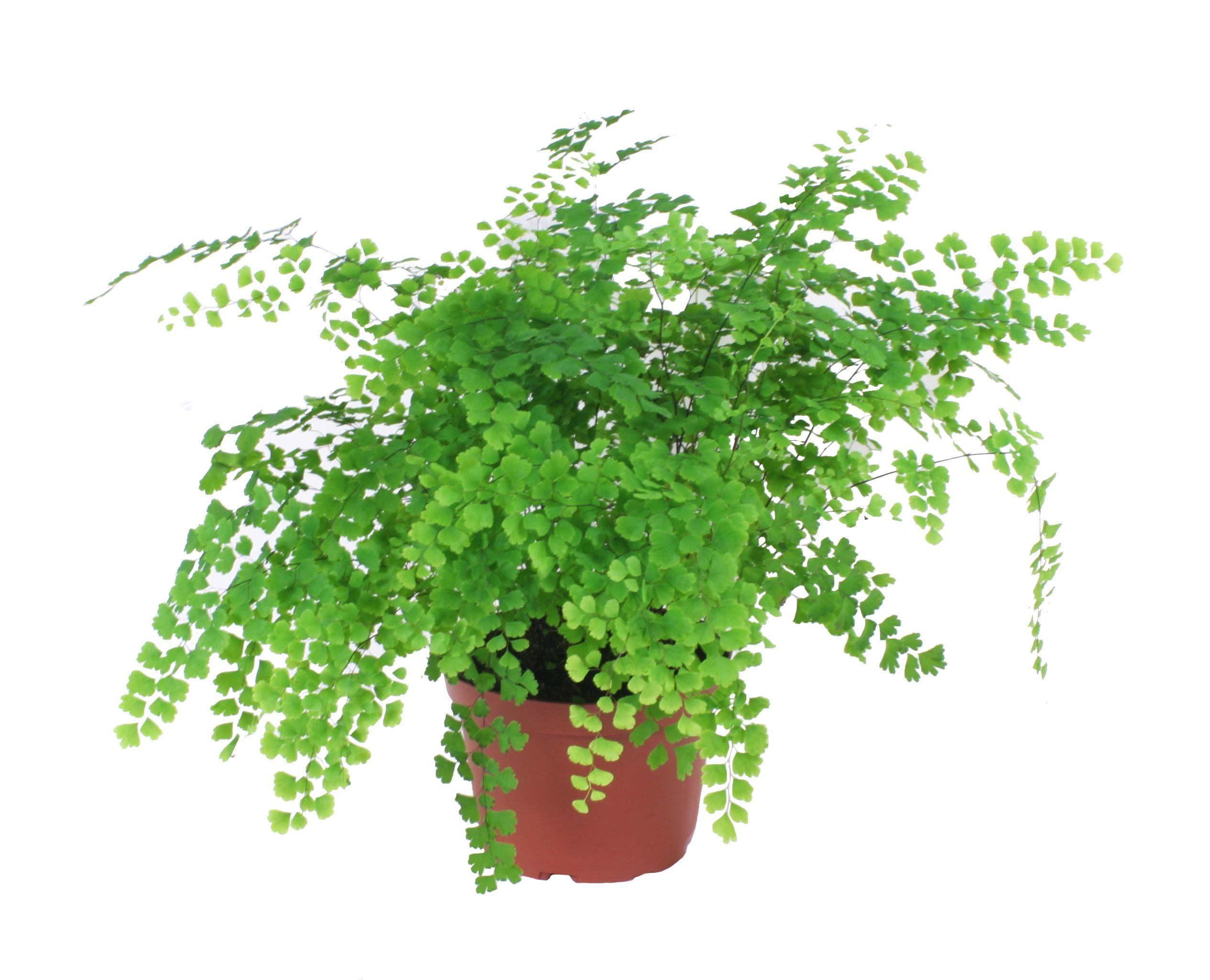 18 Best Indoor Plants For Coffee Table Gardenoid