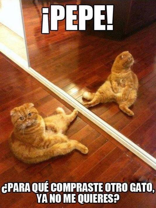 Perros Y Gatos Vol 2 Divertidas 35 Fotos Memes Graciosos De Animales Meme Gato Memes De Perros Chistosos