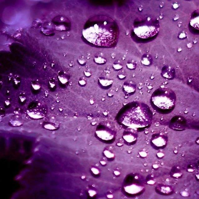 Morning dew..