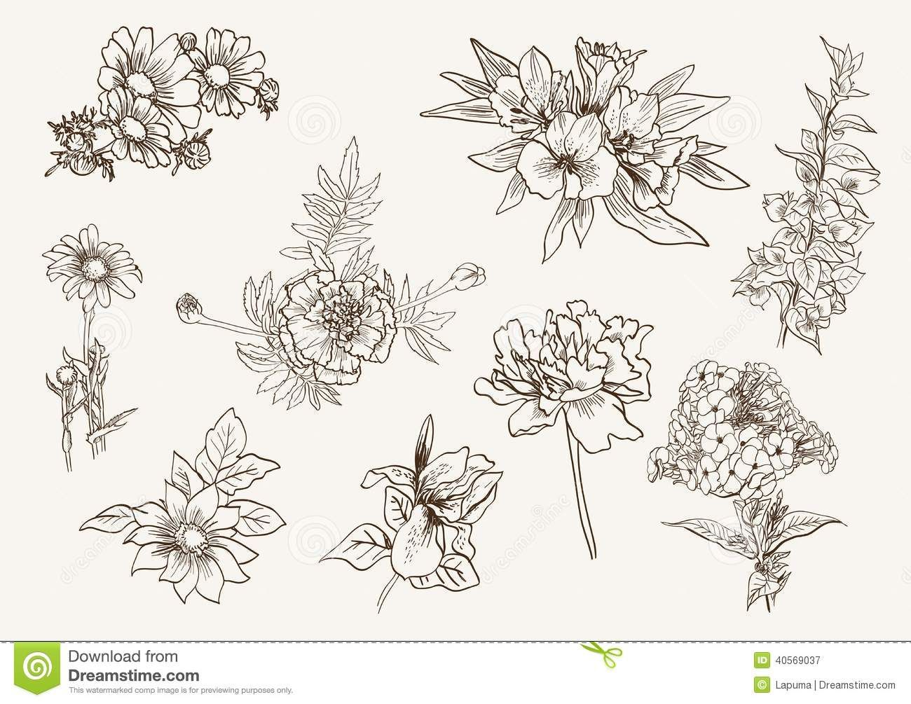 wildflowers drawing - Google Search | Tattoos | Pinterest ... - photo#19