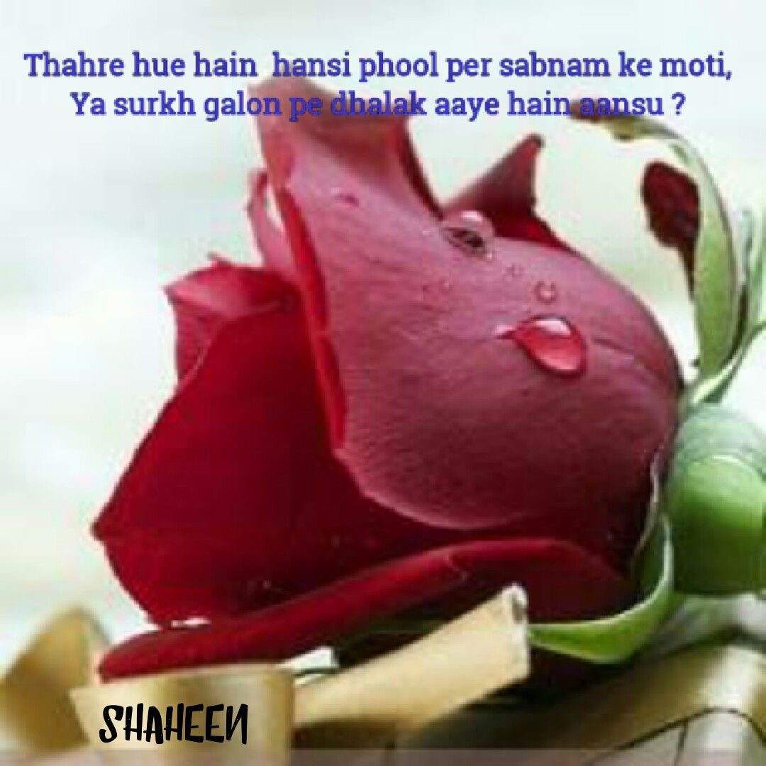 Urdu poetry urdu gazal pinterest urdu poetry urdu poetry kristyandbryce Images