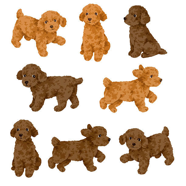 30+ Animal Figures Toys Clipart