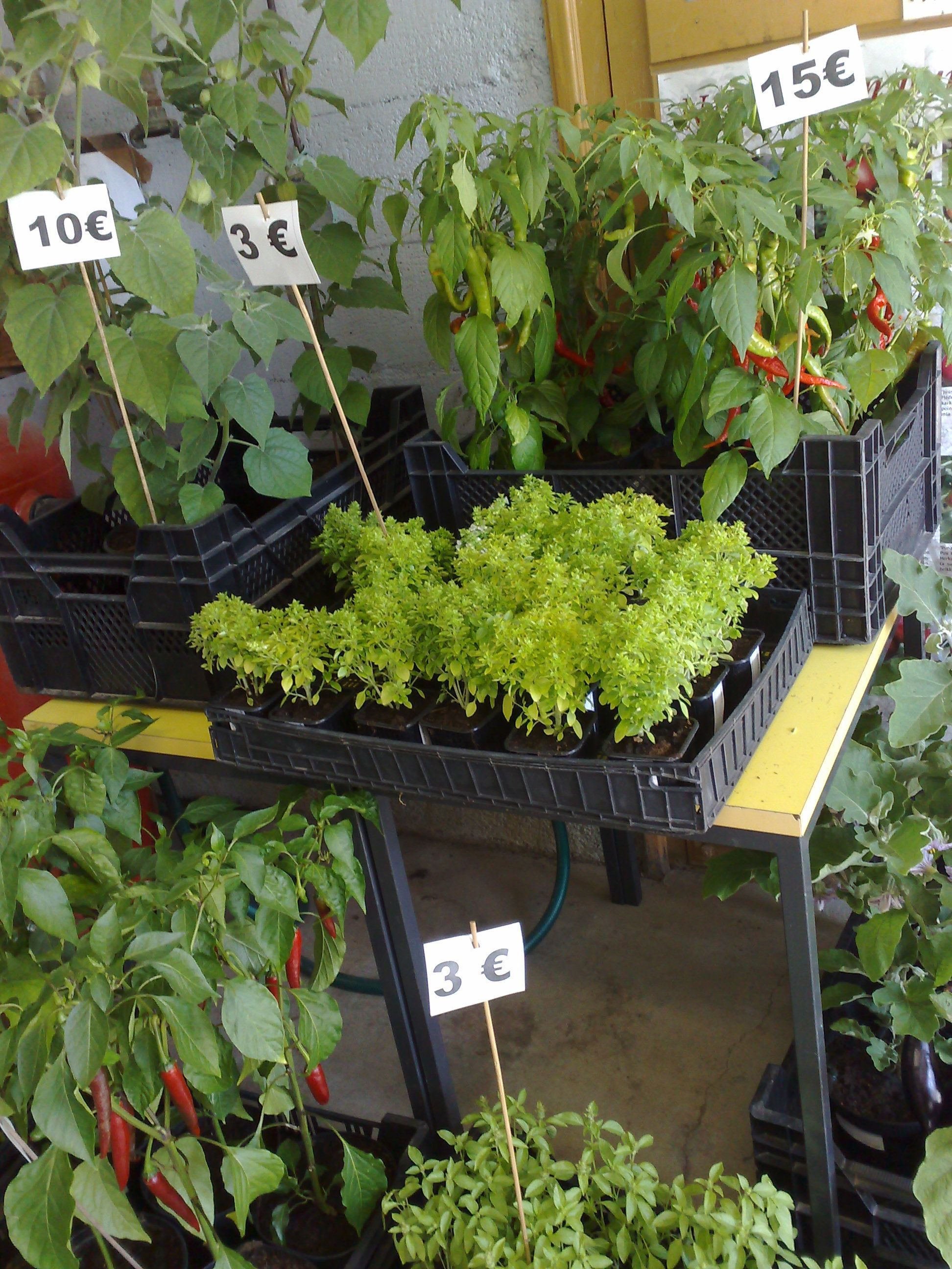 Puutarhuri osaa hinnoitella tuotteet
