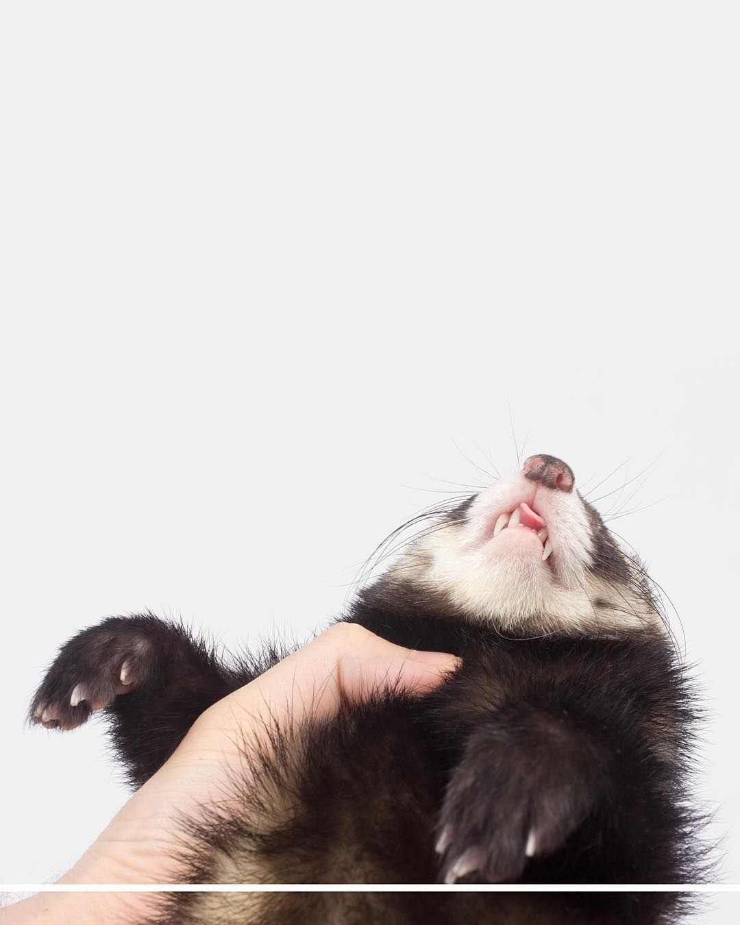 question what are the cutest ferret names you guys have ever