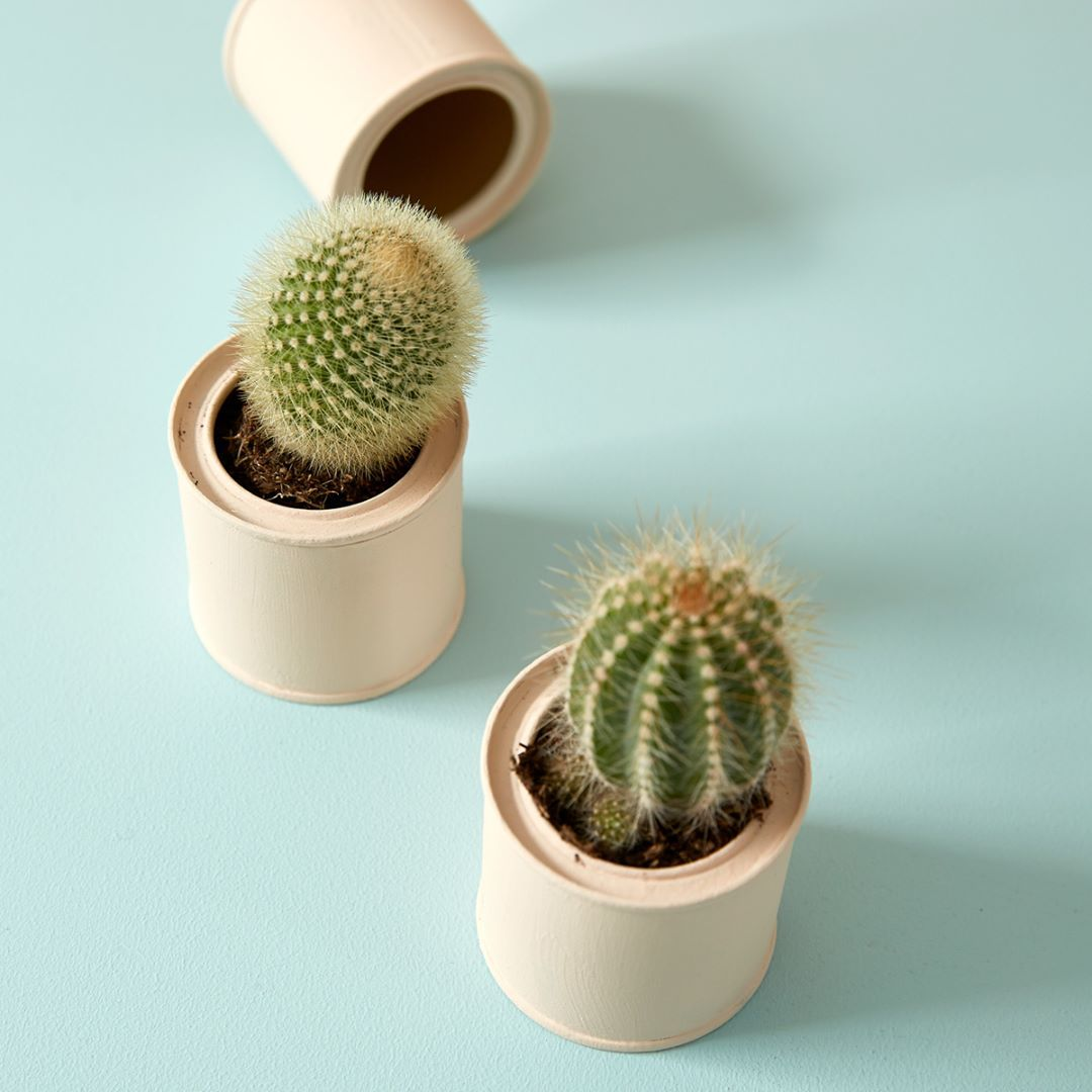Why not recycle your sample paint pots into cute flower pots in Peach Baby, to home your ever-growing house plant collection? Were all about reusing and recycling AND as our paint tins are made from 70 recycled steel, they are recyclable!