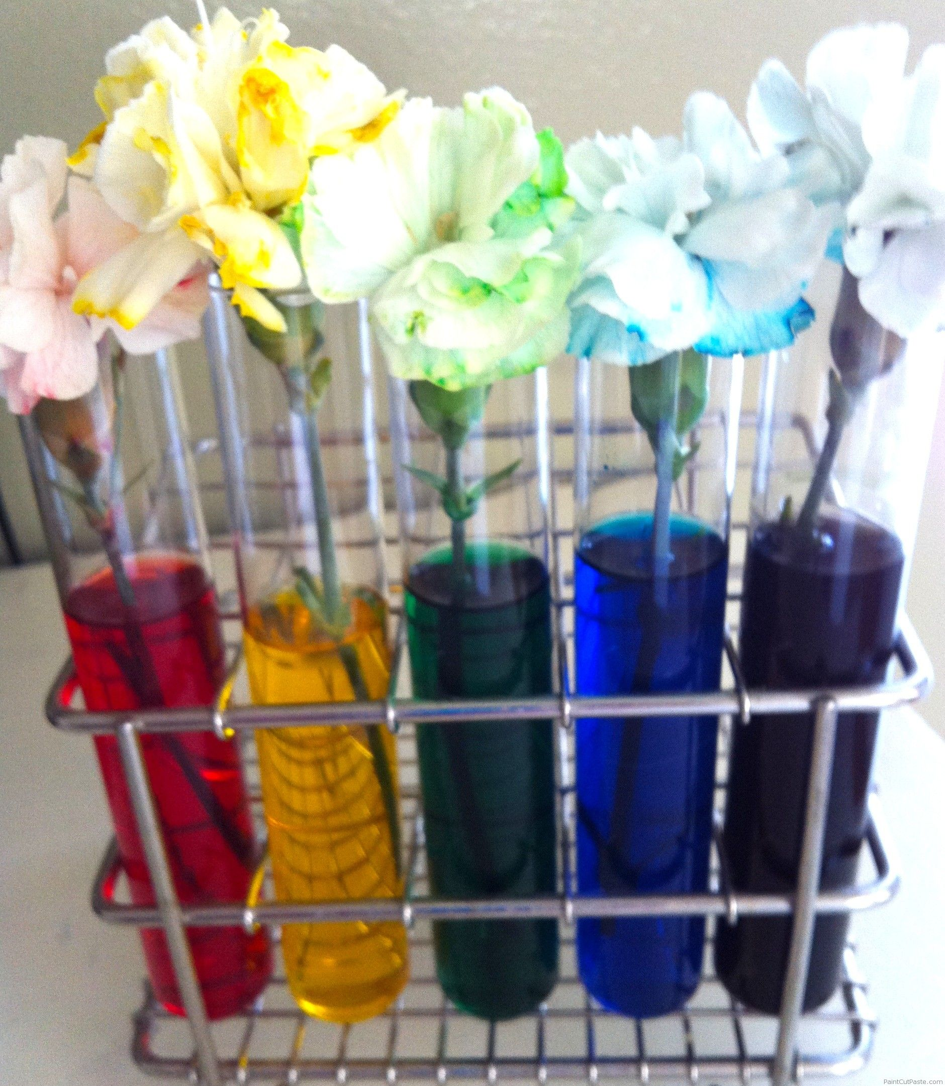 Flowers in vase change water - Rainbow Craft And Treat Ideas